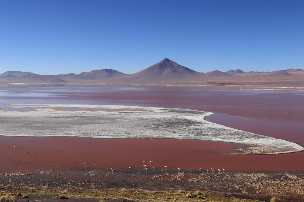 Laguna Colorado Salar de Uyuni Bolivien