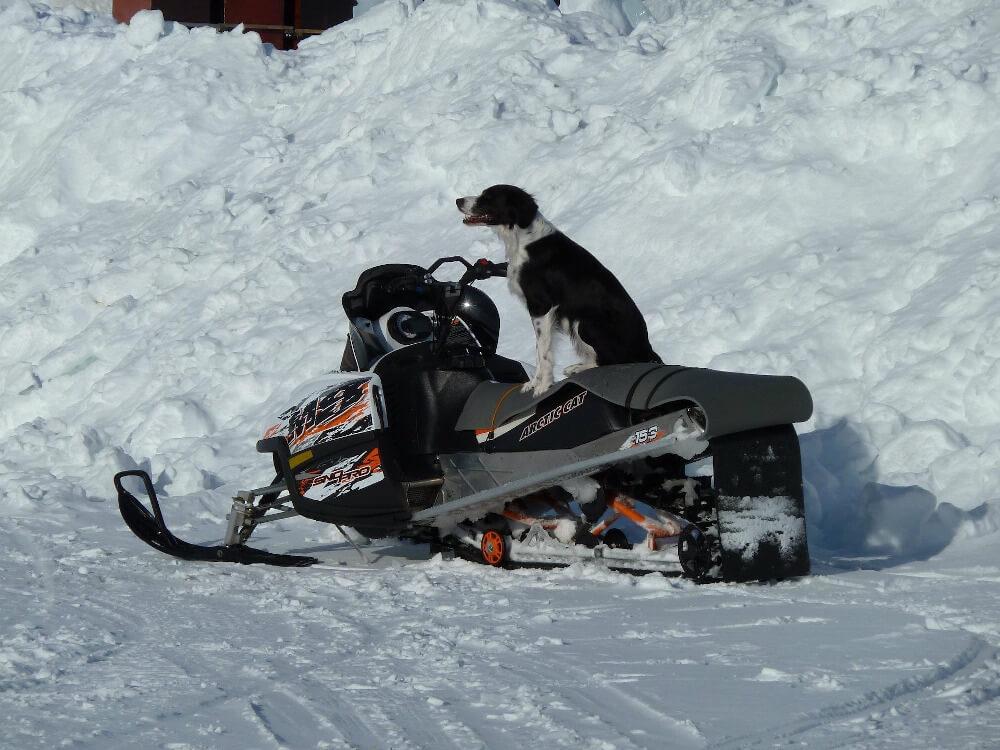 Hund mit Schneemobil