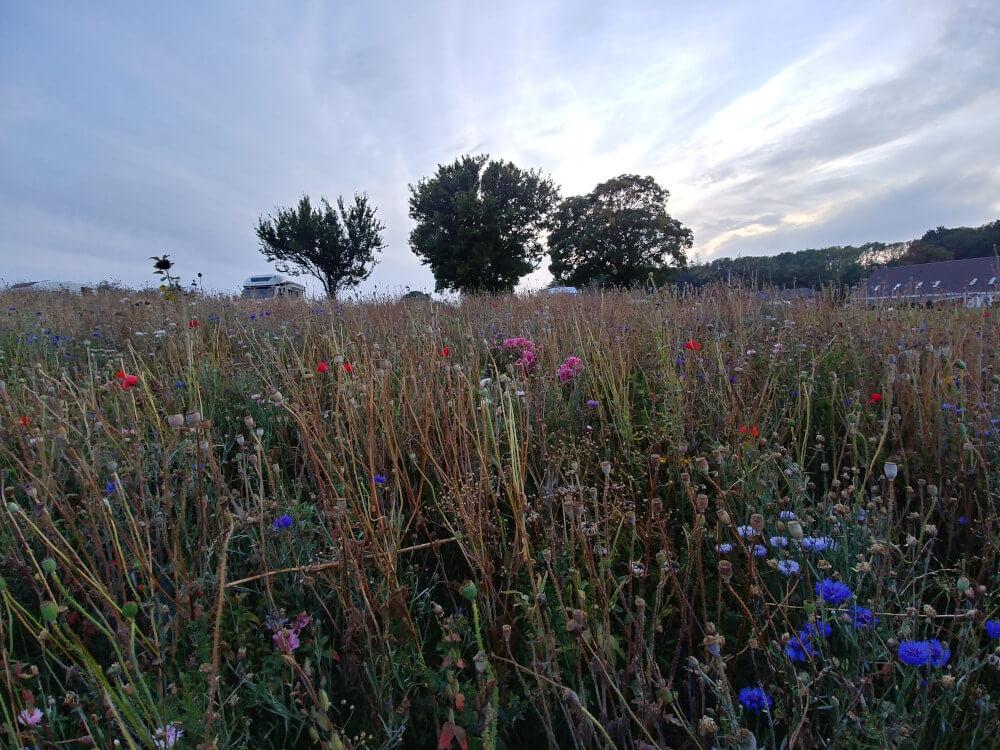 Wildblumenbeet mit Camper in Schweden